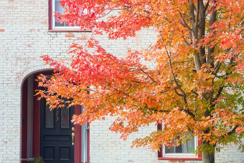 Portland, Maine USA October 2017 photo by Corey Templeton. A bit of fall foliage on Newbury Street.
