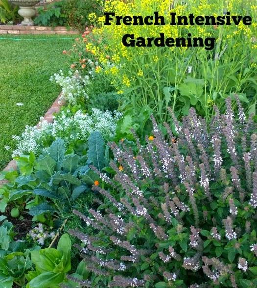 urban farm, intensive gardening, successive planting
