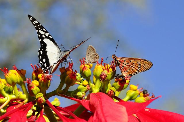 Borboletas e mariposas são insetos que, quando ainda na forma de larvas, criam casulos, onde irão se desenvolver até sair na fase adulta já com asas. Algumas lagartas de mariposa fazem buracos no chão, onde ficam até se tornarem mariposas adultas. Os fósseis mais antigos conhecidos de borboletas são de 40-50 milhões de anos atrás.