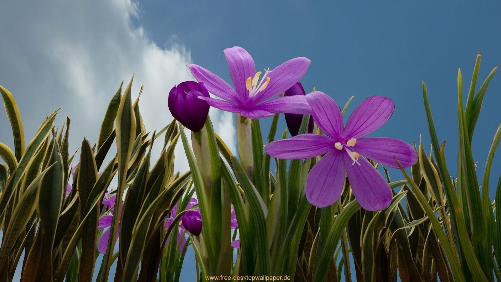 Top hd flowers wallpapers | HDIMAGESPLUS