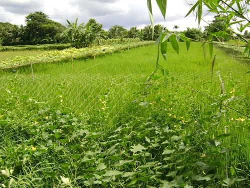 Essay on the natural beauty of bangladesh kaptai