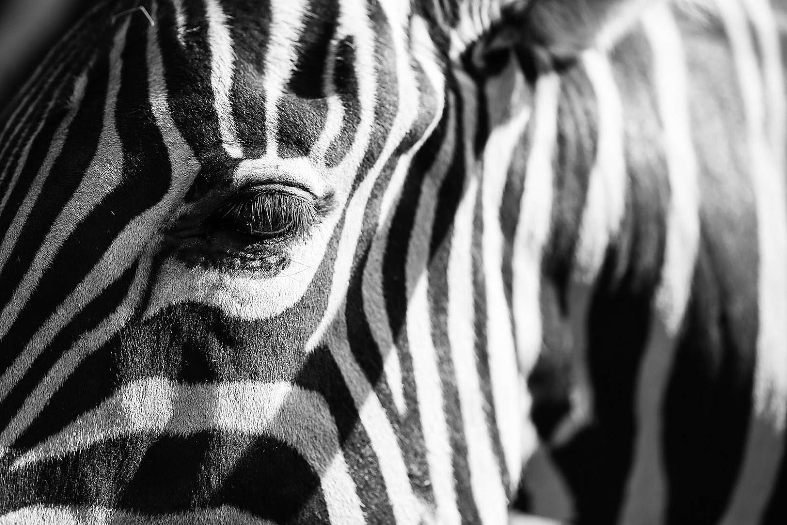 Drewniane safari - decoupage krok po kroku