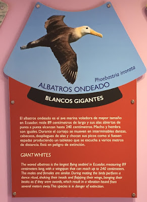 Albatross Information
