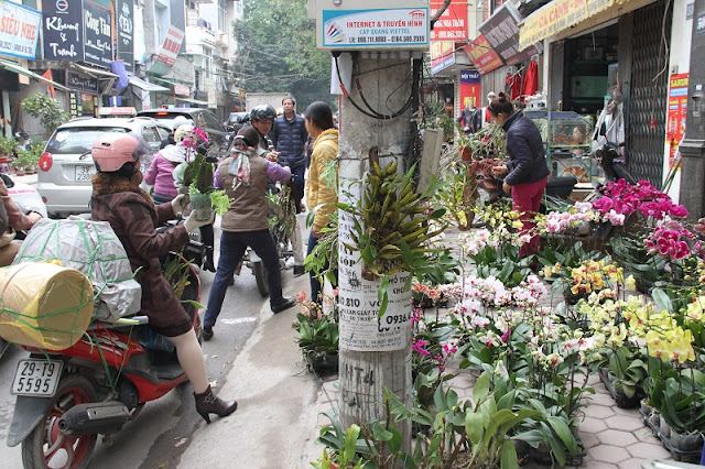 Four famous flower markets in Hanoi bustle in the Lunar New Year 1