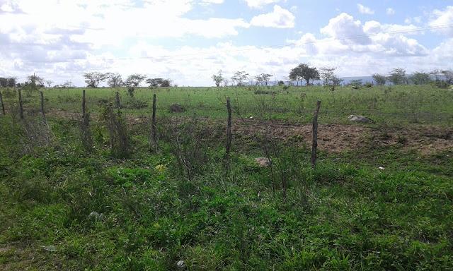 Primeiras chuvas do inverno modificam a paisagem do Sertão Alagoano