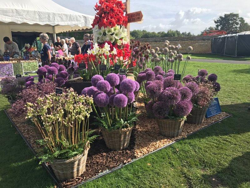 Allium RHS Garden Wisley Flower Show 2017