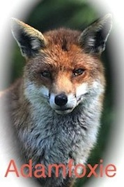 Adamfoxie Blog Int. (Click the Fox-please)