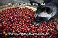 kopi luwak indonesia paling nikmat