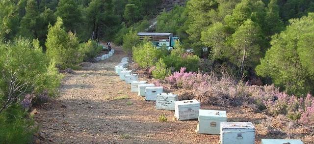 Μερικά μυστικά που κάνουν τη μελισσοκομία επικερδές επάγγελμα...