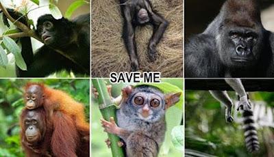 Setengah dari Semua Spesies Hewan Bisa Punah di Tahun 2100