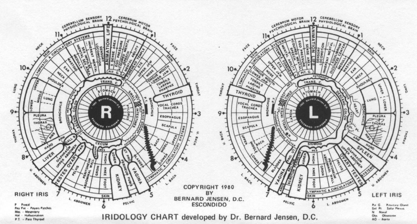 See the colon squiggle around pupil also multiple chemical survivor iridology rh multiplechemicalsurvivorspot
