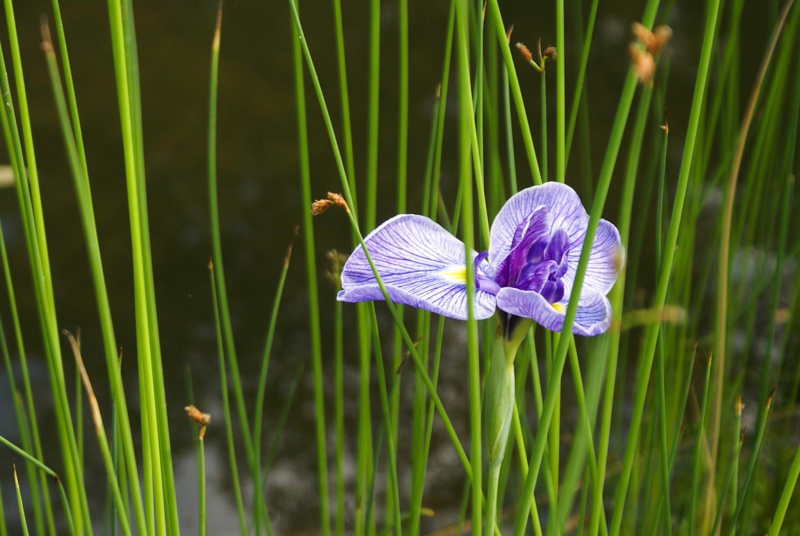 isui-en japon nara jardin fleur
