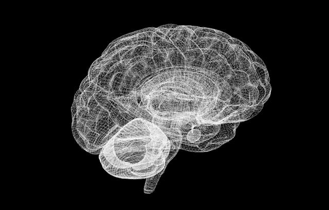 човешки-мозък