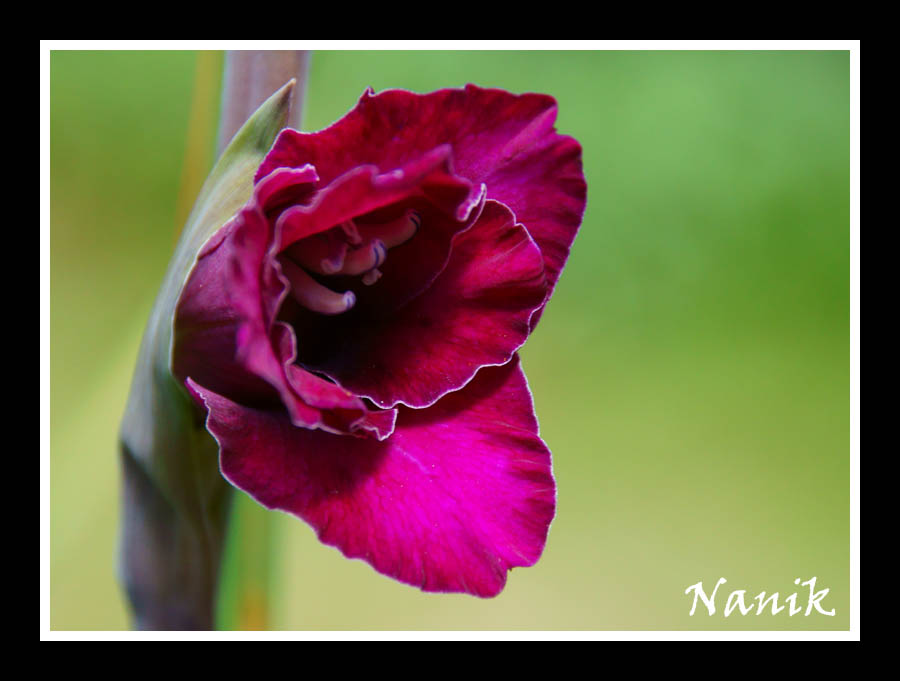 Nanikowy k cik archangel 39 s heart nalini singh - Javascript clear div content ...