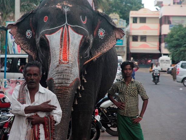 elephant tamil nadu
