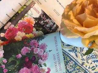 Truskot, Gardening, Roses, Old Roses, Roses of Yesterday,
