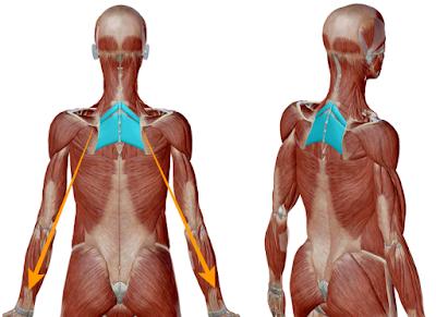 腕の重みが脊柱に加わっている様子