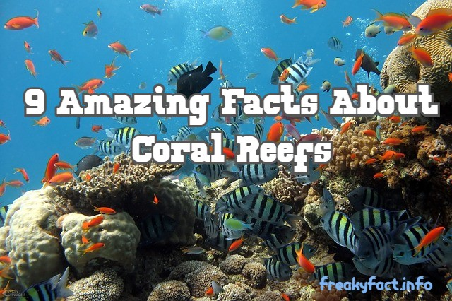 9 amazing facts about the coral reef
