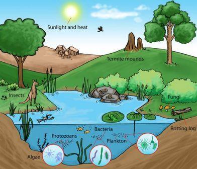 Pengertian Dari Ekosistem Dan Komponen Dalam Ekosistem Plengdut Com