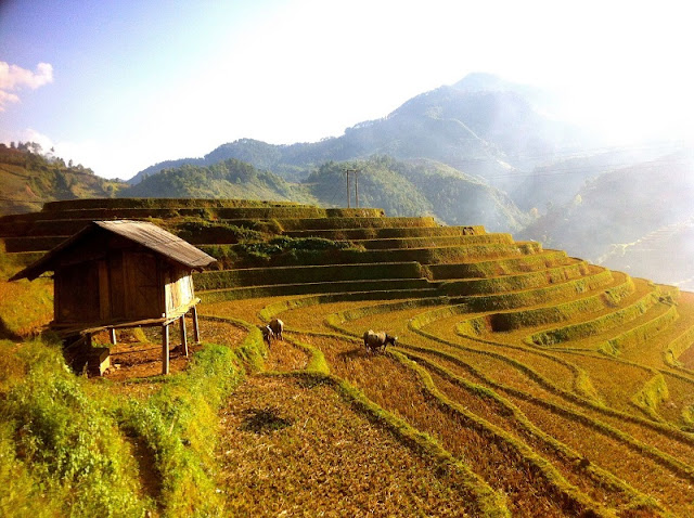 The Alluring Plateaus In The North Of Vietnam 2