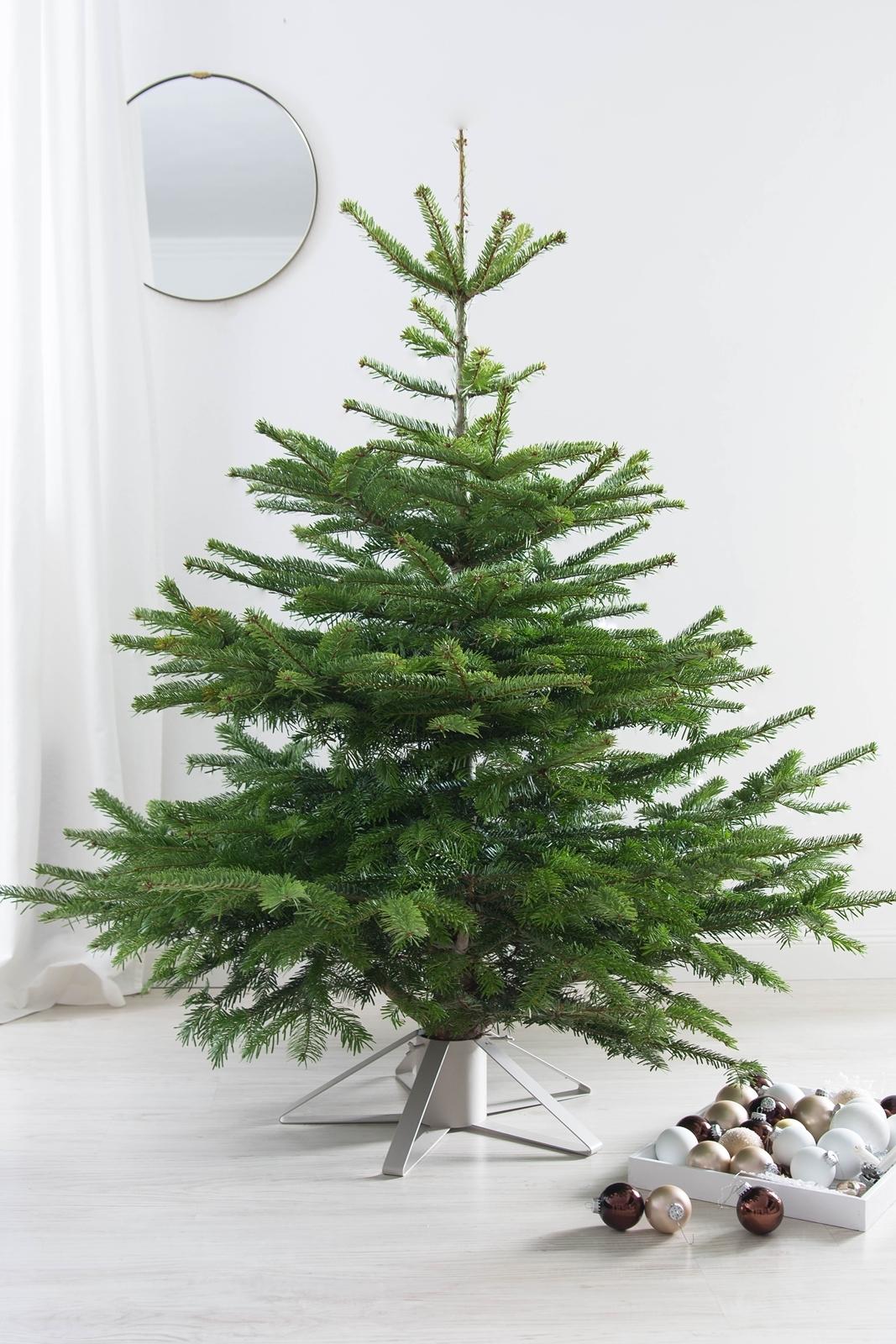 Weihnachtsbaum von Tim Tanne