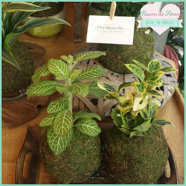 Plantas naturales sin maceta de VERDEARTE-By Ana Oval-10