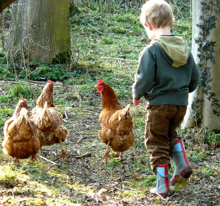 Walking with Hens