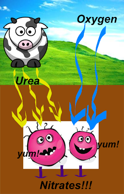 cow+peeing+nitrate.png