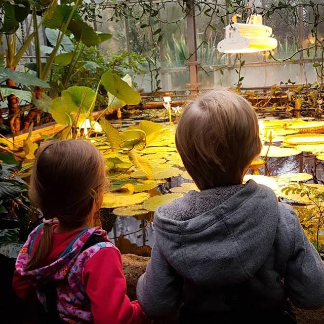 5 Ausflüge mit Kindern in Kiel bei Regenwetter. Im Botanischen Garten kann man bei Regen in den Gewächshäusern wunderbar spazierengehen.
