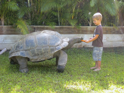 Temperamen Kura-Kura Raksasa Aldabra