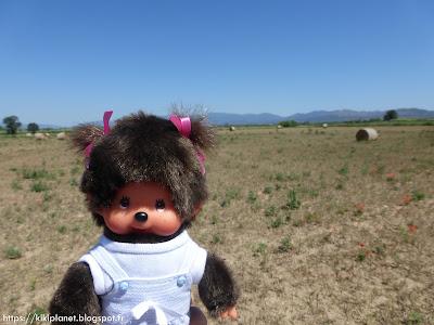 Diana la Monchhichi se promène dans un champs en Espagne