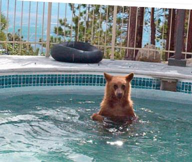 Animals In Hot Tubs Hot Tubs 101