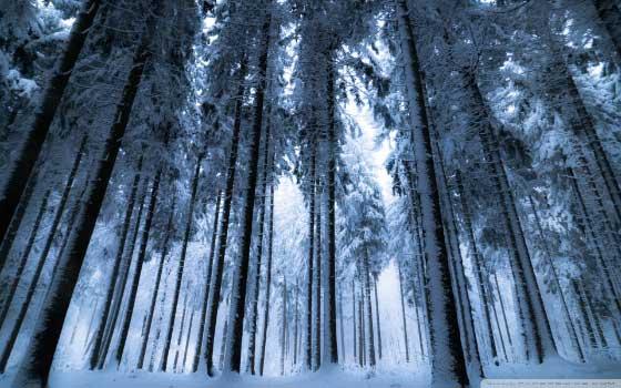 Besplatne zimske pozadine za računar - šuma zimi