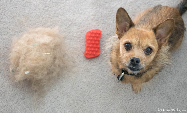 Jada next to a pile of hair after cleaning the carpet with Furbliss