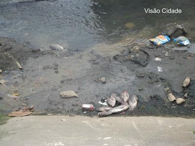 Suburbio Ferroviário:Descaso peixes morrem no Rio Paraguari