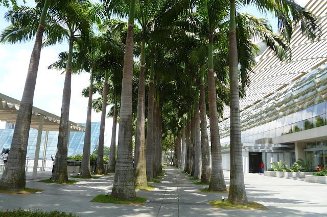 Olimpijskie palmy