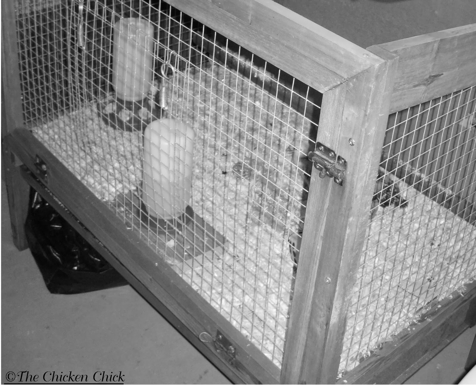 Rabbit hutch brooder.