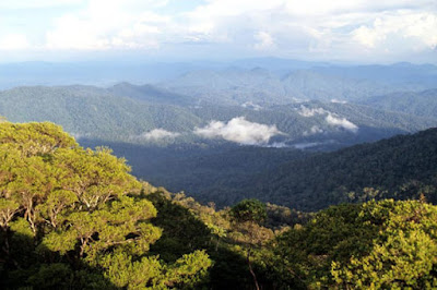 taman nasional gunung palung kalimantan barat