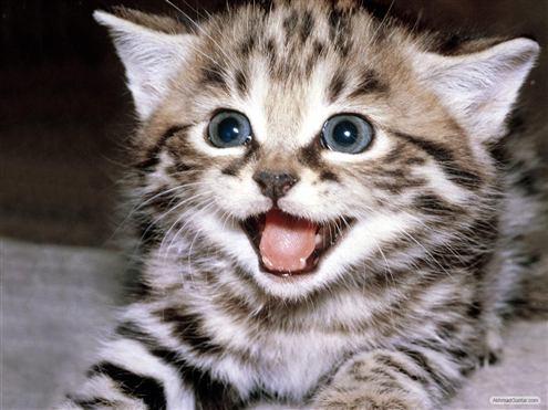 Catman Si Kucing