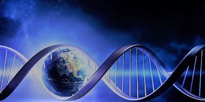 Perchè evoluzione codice genetico è limitata