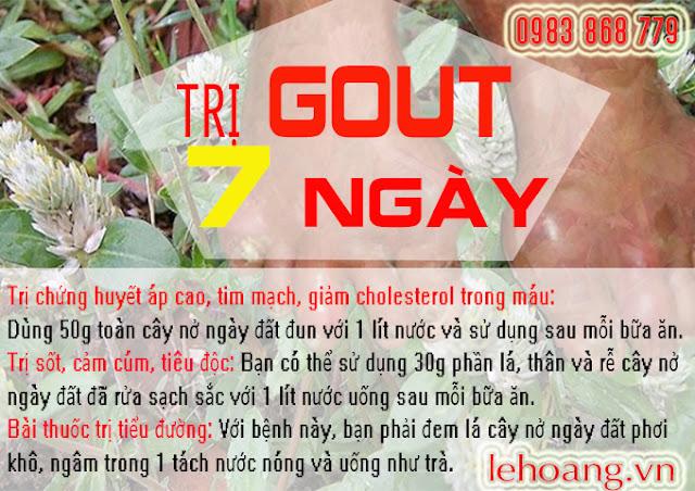 Cây nở ngày đất trị Gout, tiểu đường