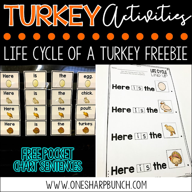 FREE turkey life cycle activities, including pocket chart sentences and sequencing printable.  Perfect for Thanksgiving and turkey time!  Plus, we love the adorable turkey crafts and turkey centers!