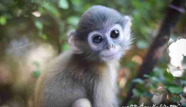 Baby Monkey Hd Wallpaper A Funn And Cute Baby 4k Photos