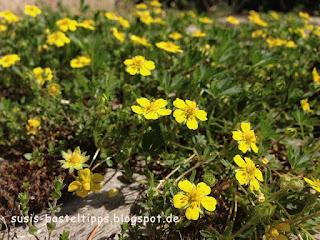 gelber Blütenteppich Foto von Stampin' Up! Demonstratorin in Coburg