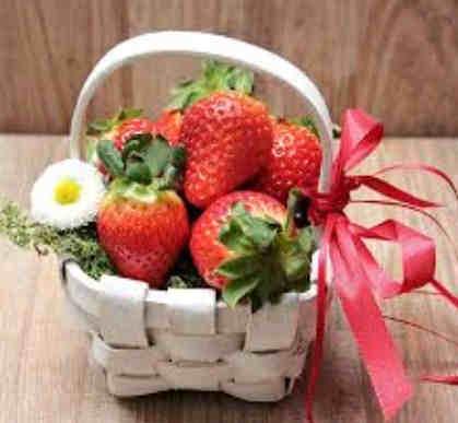 cara menanam strawberry dari biji dalam pot