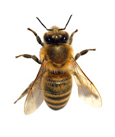 Do you know the difference between your flying pests?