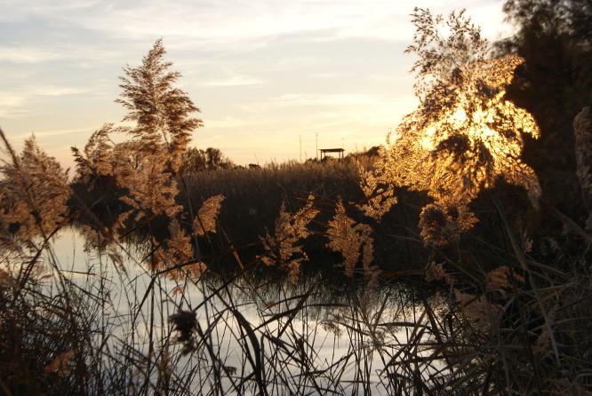 Estany del sol (Muntanyans) per Teresa Grau Ros