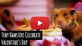 Watch these tiny little hamsters celebrate Valentine's day with a date in Venice via geniushowto.blogspot.com cute pet videos