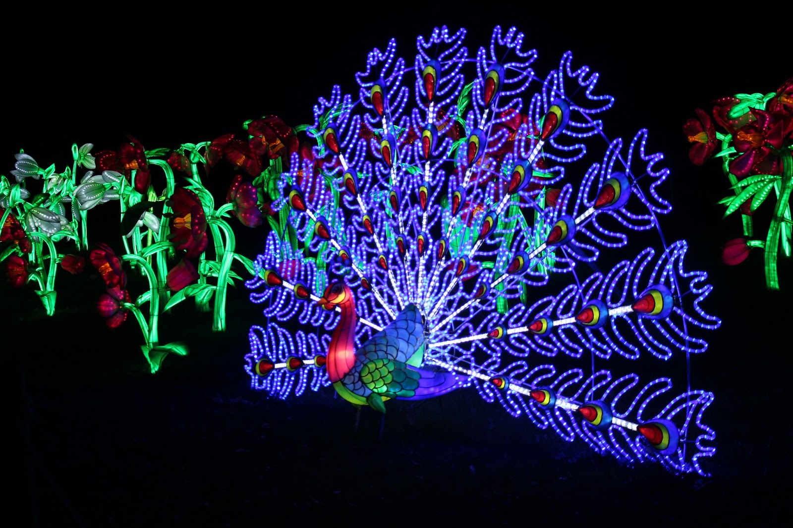 christmas at kew 2015 peacock lights