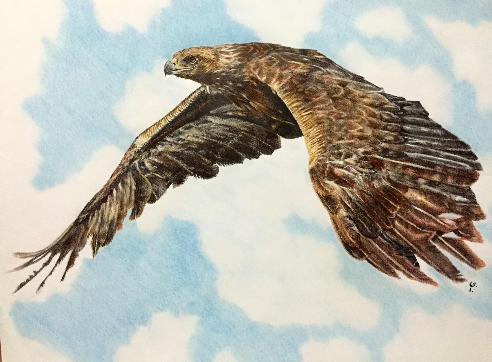 Eagle Drawing Kartal Cizimi Yusa Yildiz